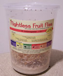 buy flightless fruit fly cultures